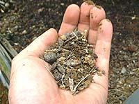 乾燥した土